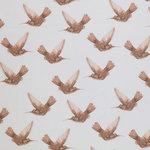 kolibri bruin beebs