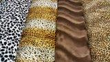 dalmatier – luipaard cognac – wit & bruin – bruin effen – lynx