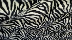 zwart wit kleine zebra - kortharig